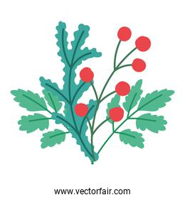 merry christmas, holly berry decoration ornament, isolated design