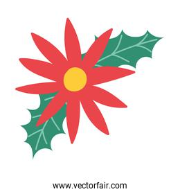 merry christmas, poinsettia flowers and leaves decoration, isolated design