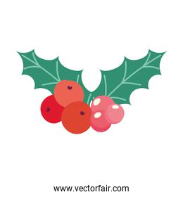 merry christmas, holly berry decoration season, isolated design