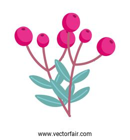 merry christmas, holly berry branch leaves decoration isolated design