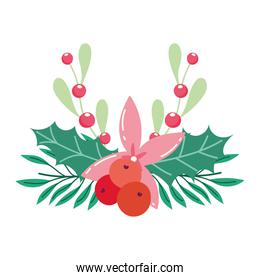 merry christmas, poinsettia flower leaves holly berry season decoration, isolated design