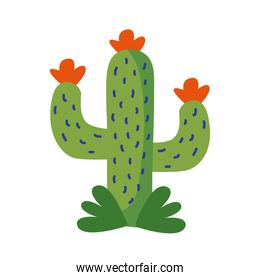 cactus mexican plant flat style