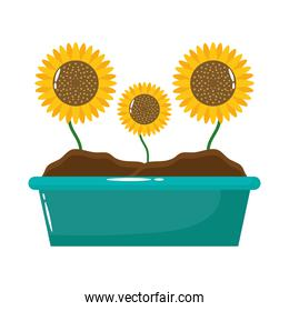 sunflowers growth plant flat style icon
