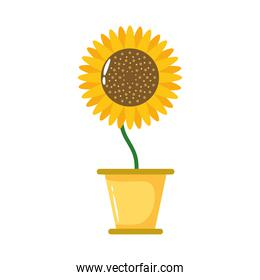 sunflower growth plant in ceramic pot flat style icon
