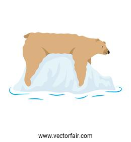 polar bear wild animal in iceberg icon