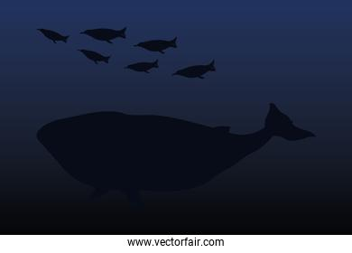 penguins and whale animal vector design