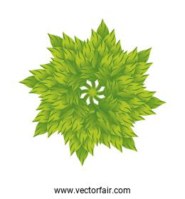 circular ecology leafs plants nature decoration