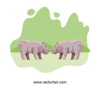 wild hippopotamus couple animals nature icons