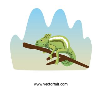 wild chameleon animal nature icon