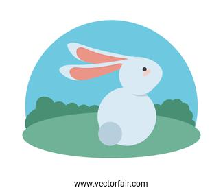 cute little rabbit easter animal seated in the camp