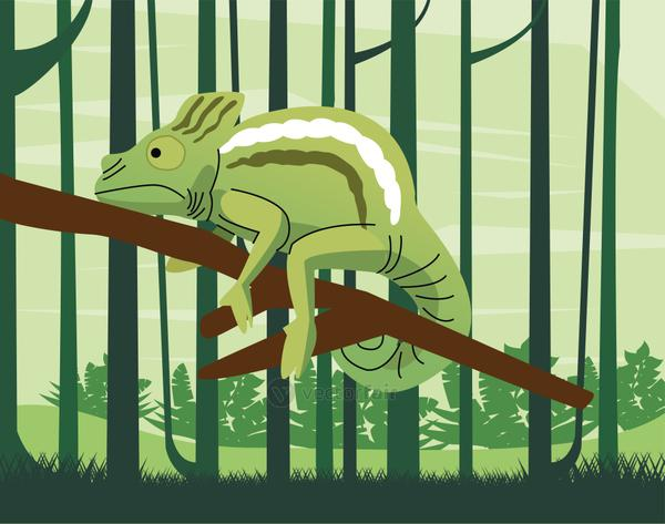 wild chameleon animal in the jungle scene