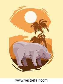 wild hippopotamus animal in landscape scene
