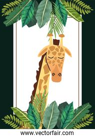 wild african giraffe with leafs square frame