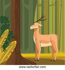 wild reindeer animal in the forest