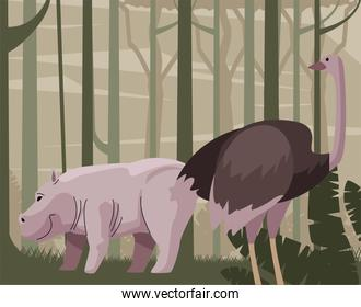 wild hippopotamus and oztrich in forest scene