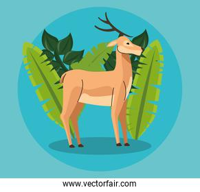 wild reindeer animal and tropical leafs
