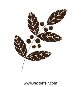 coffee seeds branch foliage nature silhouette icon style