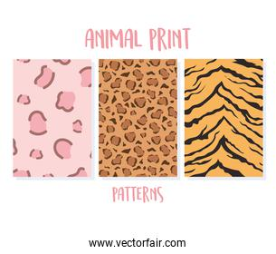 set of animal seamless prints, tiger and leopard patterns