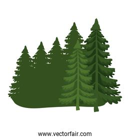 pine trees icons vector design