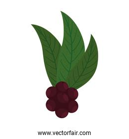 coffee beans with leaves vector design
