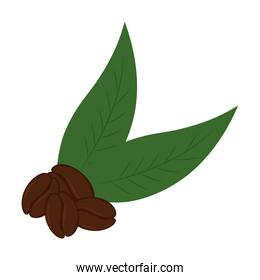 coffee beans with leaves isolated vector design