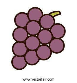bunch grapes fruit nature line fill icon