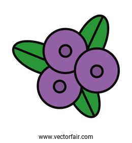 blueberries and leaves icon, line and fill style