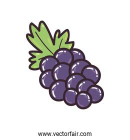 grapes fruit line and fill style vector illustration