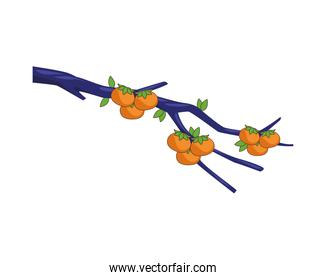 tree branch with oranges citrus fruits nature