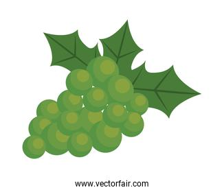 grapes fresh fruits isolated icon