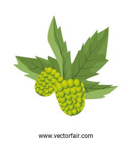 hops and leafs plant icon