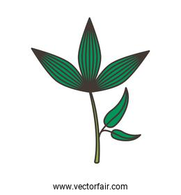 branch with leafs plant nature icon isolated