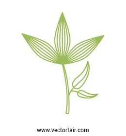 branch with leafs plant isolated icon