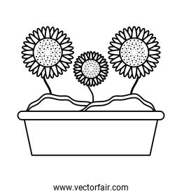 sunflowers growth plant line style icon