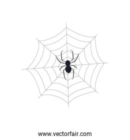 spider on web icon, flat style