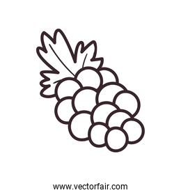 grapes fruit line style icon vector design