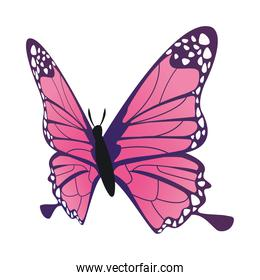 pink butterfly flying insect icon