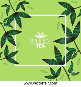 green tea lettering poster with leafs and square frame