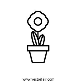 sunflower growth plant in ceramic pot line style icon