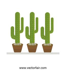 cactus mexican plant in ceramic pot flat style