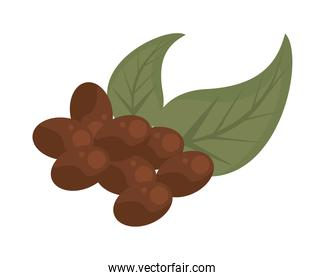 coffee plant grains and leafs nature flat icon