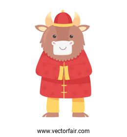 happy new year 2021 chinese, cute ox with traditional clothes oriental