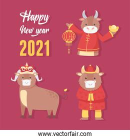 happy new year 2021 chinese, greeting card oxes character season