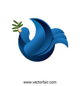 blue pigeon bird with olive branch