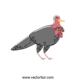 turkey bird animal isolated detailed icon