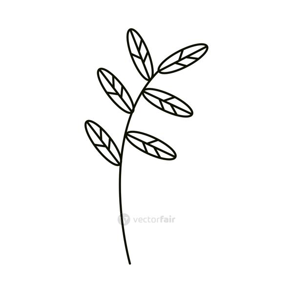 leaves line icon style, decorative branch nature
