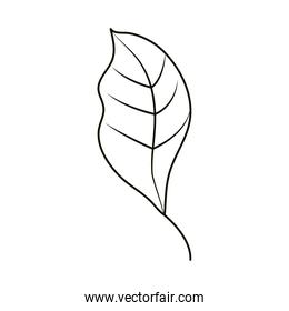 leaves line icon style, leaf natural ecology