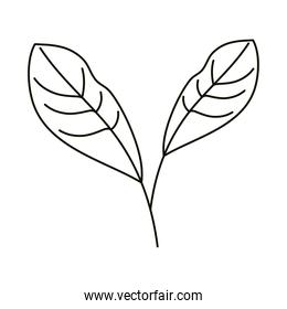 leaves line icon style, natural leaves herbs