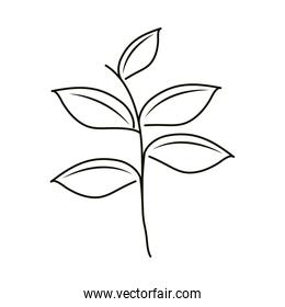 leaves line icon style, plant branch leaves