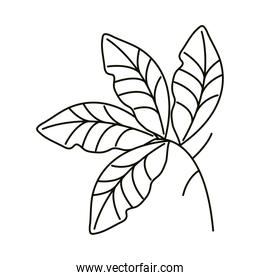 leaves line icon style, branch leaves decoration element